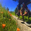 Trails Laced With California Poppies Made Today's Spring Ride Addicting
