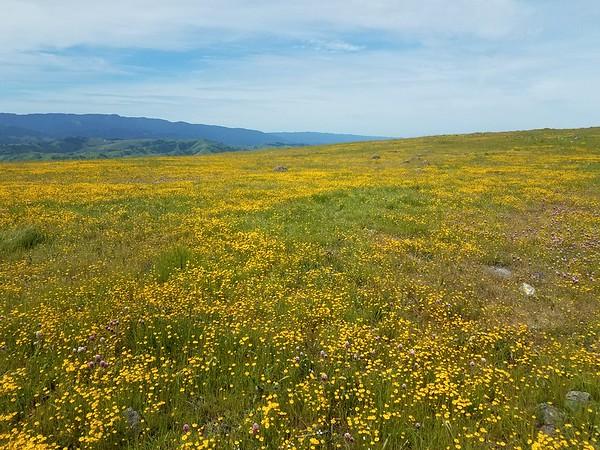 Goldfield & Serpentine Grasslands