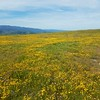 Goldfield & Serpentine Grasslands