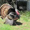Rancho Turkey