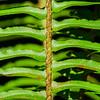The symmetry a green fern leaf