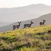 Deer Conversing Trailside