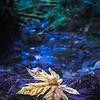 Leaf at Night
