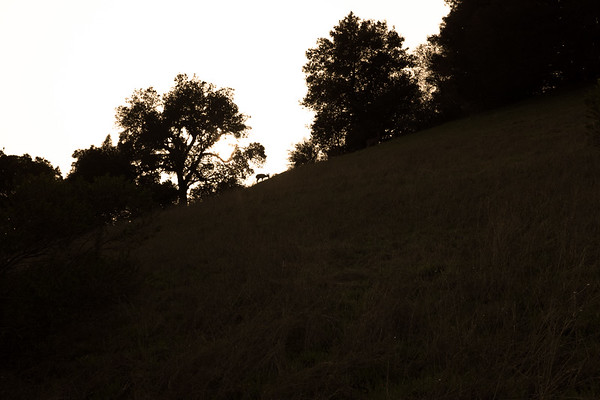 Deer Graze on Skyline Ridge at Sunset - March 24 2017