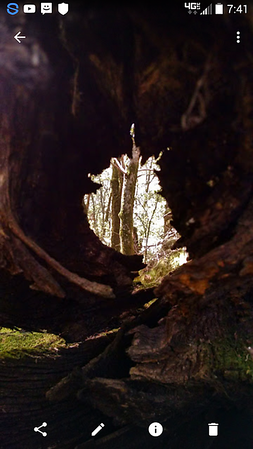 Looking through a knothole