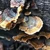 Look at that Fungi!