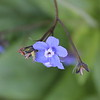 The Happy Blue Of Wild Flower Hikes