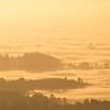 Golden Fog I