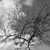 Tree on Sky
