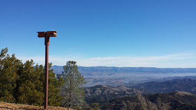 Now that the hazardous materials removal and demolition are completed, we have installed nesting boxes for rare Purple Martins that call the summit home. They will enjoy a view of Coyote Valley and beyond to Yosemite National Park due east through a notch in the ridgeline.   Photo: Brian Fair