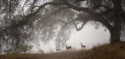 Deer, smoky air, and drought