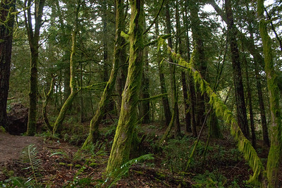 Epiphyte Trail