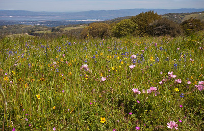 Poonam Murgai - Spring Drama and Bay Views - Russian Ridge OSP Category: Landscapes