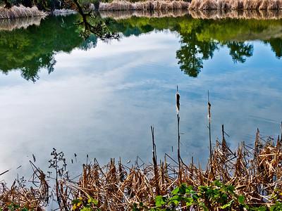 Jan Tuan - Alpine Pond Reflection - Skyline Ridge OSP Category: Landscapes