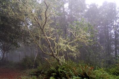 Mossy Oak in the Clouds