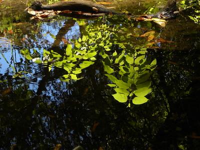 Reflection in Creek