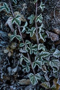 Trailside Frost