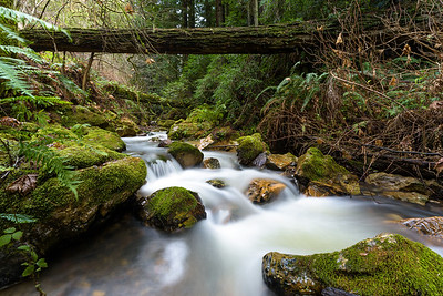 Purisima Creek Under Fallen Trees