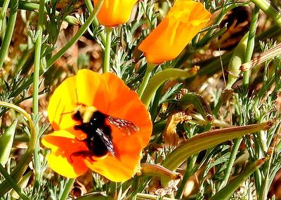 Dinner! Feeding the Bees