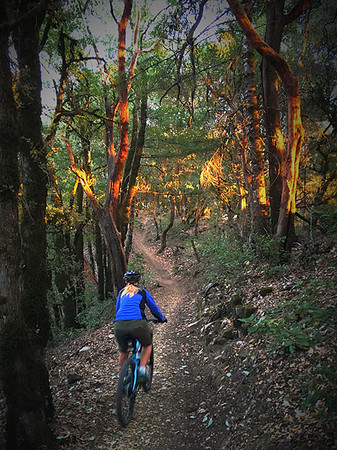 Heidi in awe of the Madrone at Sunset