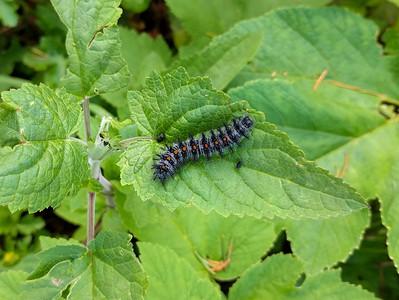Caterpillar Having Lunch