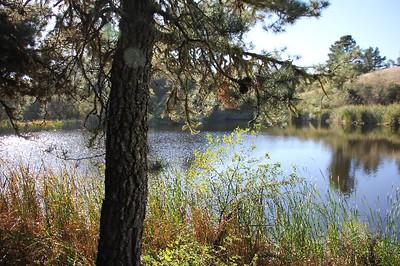 Alpine Pond (1)