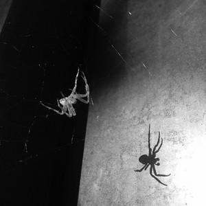 Polarity-small spider on trail route board