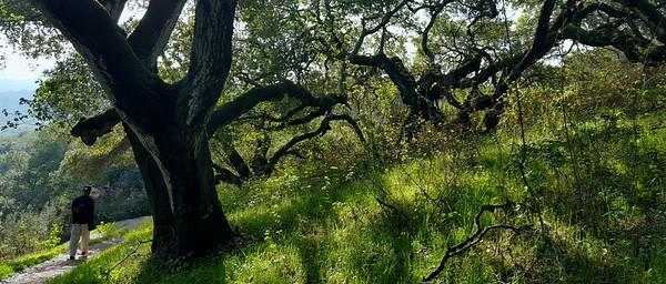 Tiny amongst the trees