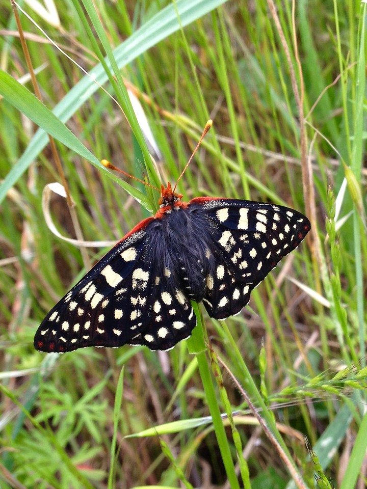 Lovely little butterfly resting on the grass