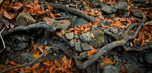 Honorable Mention: Fall Leaves by Eric Lew - Monte Bello OSP (Stevens Creek Nature Trail)