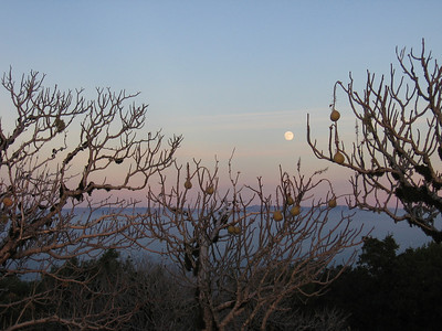 Honorable Mention: Buckeyes at Black Mountain, Night Before Full Moon by Carol Mattsson - Monte Bello OSP (Monte Bello Road)