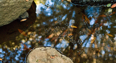 Second Place Prize Winner: Reflection by Eric Lew - Monte Bello OSP (Stevens Creek Nature Trail)