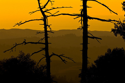 Honorable Mention: Sunset Ridges through the Dancing Snags by Karl Gohl - Russian Ridge OSP (Ridge Trail)