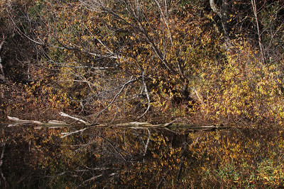 Reflections at Windy Hill OSP by Hazel Holby