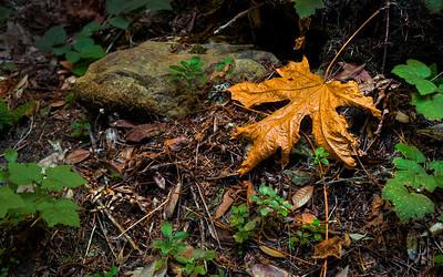 Dean Birinyi - Autumn's Treasure - High Dynamic Range Image  - Windy Hill OSP