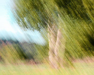 Robert Clark - Impression of Trees on a Sunny Day  - Picchetti Ranch OSP