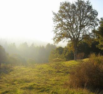 Ken Nitz - Bear Creek Near Vineyard at Sunset.    - Bear Creek Redwoods OSP