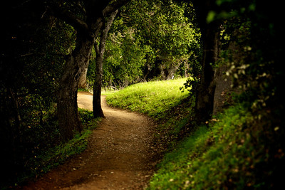 Alamelu Sankaranarayanan - A section of the Wildcat Loop Trail  - Rancho San Antonio OSP