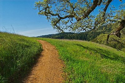 G Hughes - What's Around The Corner - Monte Bello OSP Category: Landscapes