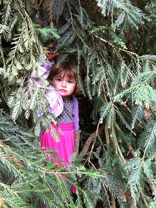A Reid - Hiding Under a Redwood - Foothills OSP Category: People