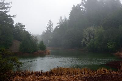 R Cowan - Winter rain at Horseshoe Lake - Skyline Ridge OSP Category: Landscapes