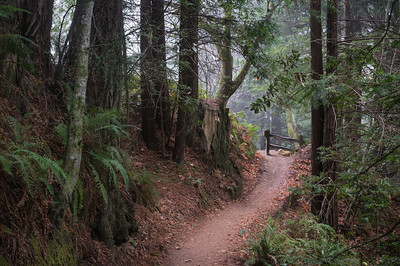 A George - Craig Britton Trail - Purisima Creek OSP Category: Landscapes