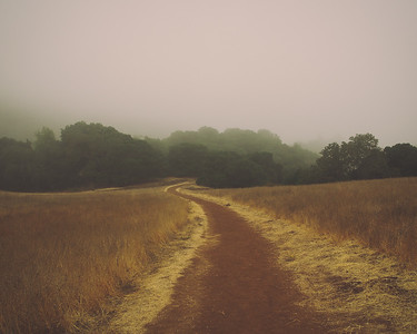 B Hsu - Foggy Day - Rancho San Antionio OSP Category: Landscapes