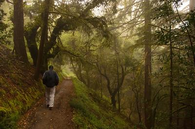 Sunlit fog hike at El Corte de Madera