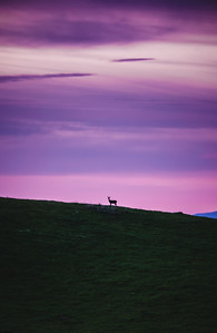 A lone deer watches the day wake