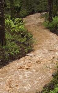 Turbid storm water colors the creek