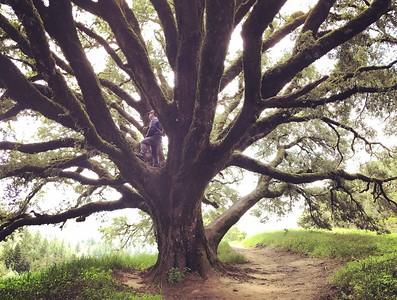 Oh how I love tree