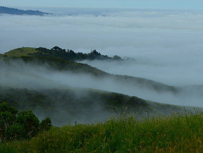 Above the Morning Fog on Windy Hill