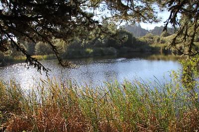 Alpine Pond (2)