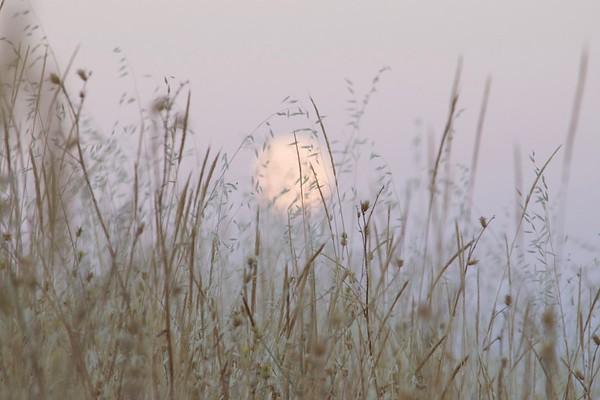 Moon lit grasses